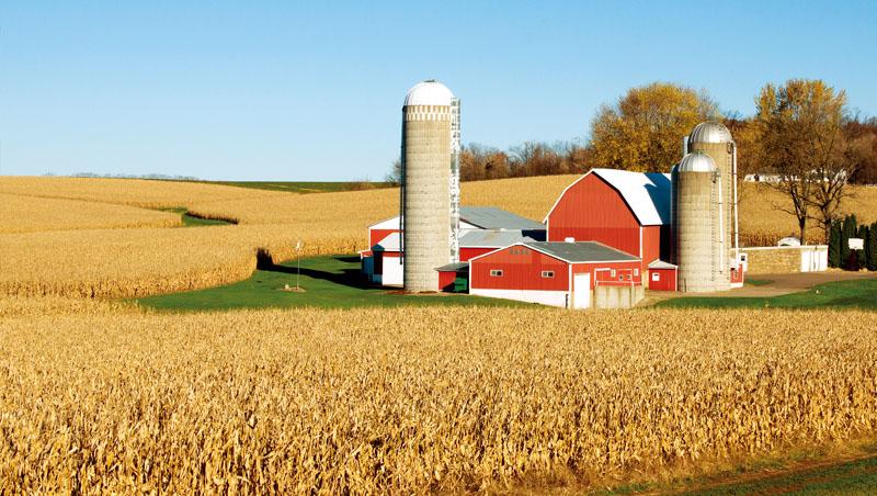 「黃小玉」大漲,玉米漲124%最猛,與小麥價格同創8年新高