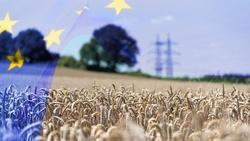 歐盟最新農業政策!將25%預算用於環境保護,會有效嗎?