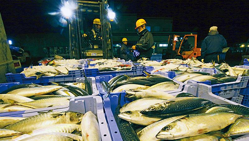 漁法不斷進步,使台灣鯖魚面臨生存威脅(右圖);日本則積極以時節、產地等方式推展各種品牌。左圖為長崎縣五島海域,僅限每年10月到隔年2月、重量400公克的鯖魚才能掛上「旬鯖」品牌