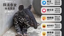 馬來貘寶寶取名為貘花豆》name當動詞除了命名,還有哪些意思?