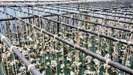 「活體」系統比堤壩有效!牡蠣成孟加拉防洪第一線