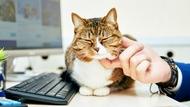 每月5千日圓養貓津貼、一年5天「育貓假」...進階版幸福企業:陪員工當貓奴