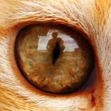 貓眼看世界