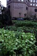 遠東飯店旁每坪四百五十萬元的空地 ,目前拿來種菜。