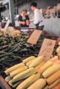 經基因改造的蔬果,外觀與一般蔬果沒兩樣,消費者很難辨識出來。
