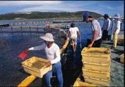 養殖漁業已不再是「傳統產業」,若以高科技進入研究,大有發展空間。