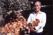 卜蜂飼養的肉雞是麥當勞與肯德基炸雞的共同來源。