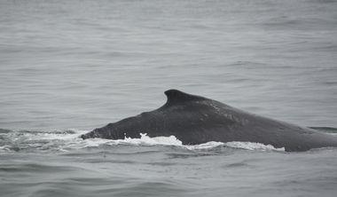藍鯨消失誰的錯?