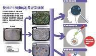 日本奪諾貝爾獎的祕密:新種萬能細胞