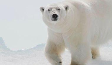 到極地拍北極熊 你需要這樣的裝備