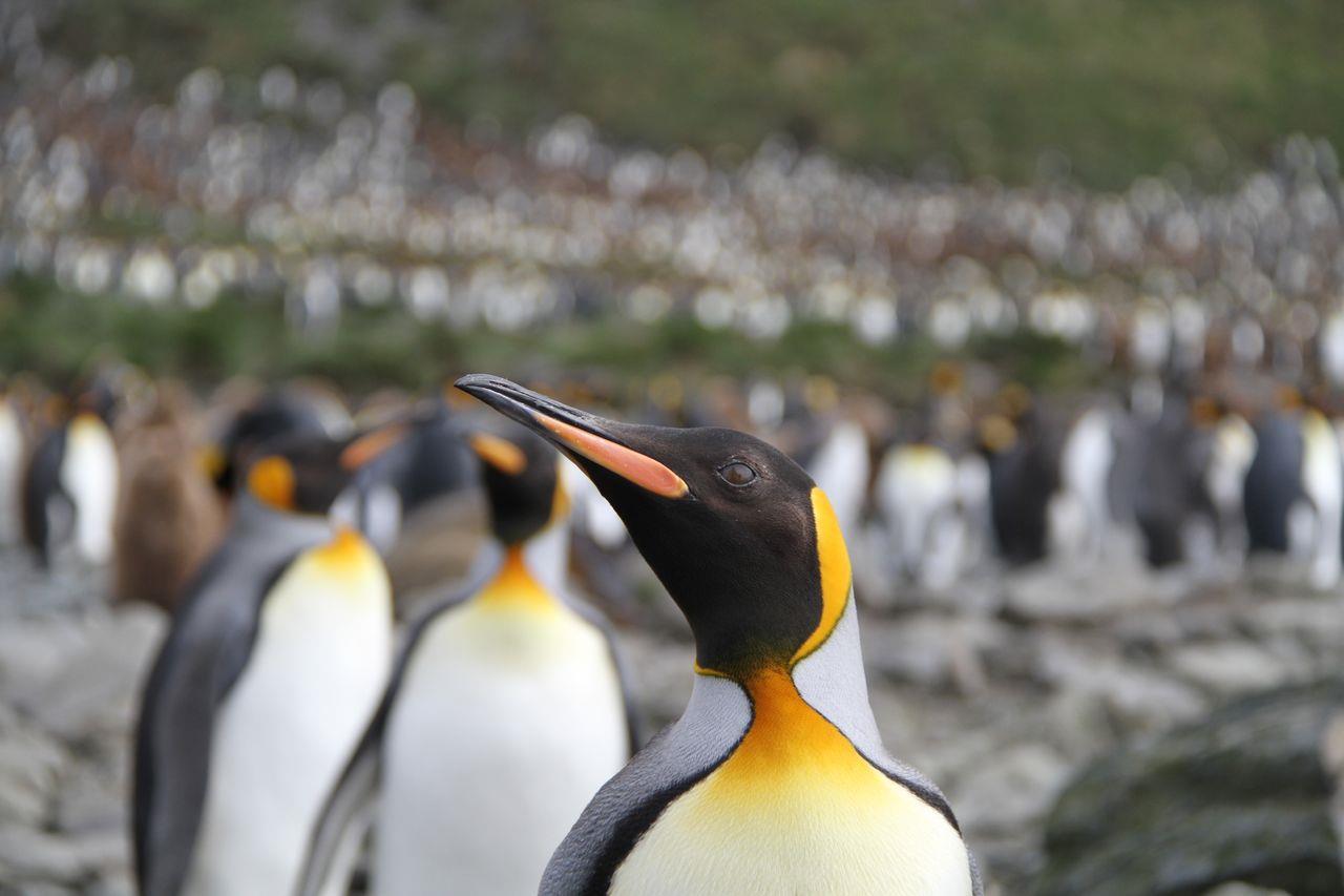 每位南極遊客或多或少都會被抽成作保育