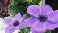 智慧手機週邊聯動商品 告訴你什麼時候該澆花
