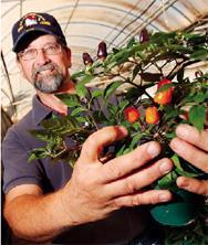 新墨西哥州辣椒農自詡氣候和土壤比世上任一地區更適合種植,據此力爭食品身分證。