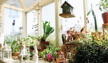 園藝專家教你打造室內小花園。
