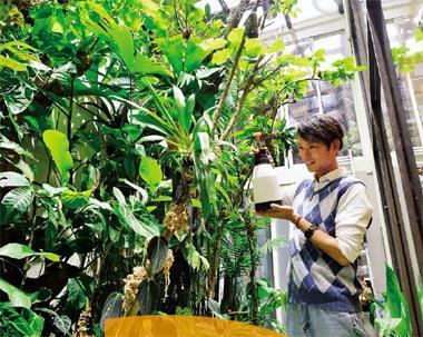 這座藍米克模擬亞馬遜河熱帶雨林生態所建的溫室,可以說是他整間屋子中最費心的角落。