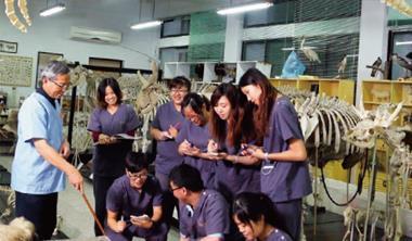 屏科大獸醫系的解剖標本室,蒐藏全台最多的動物標本,如天花板的海豚、架上的羊等。圖中教授正透過標本解釋鱷魚的身體構造。
