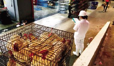 禽流感資訊不公開,動物保護團體告贏農委會;人民向政府要資料,不再被擋門外。