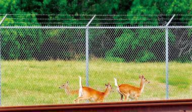 德州地廣人稀,石化廠可以遠離人群,跟野鹿做鄰居。