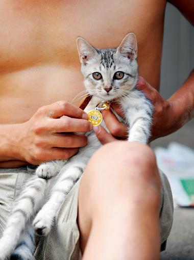 施打過疫苗的貓和狗,可配戴政府單位發給的防疫注射的證明牌,讓鄰里安心。