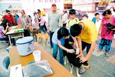 因疫苗到貨不及,東河鄉接種狂犬病疫苗的時間,從白天一路延長至深夜。