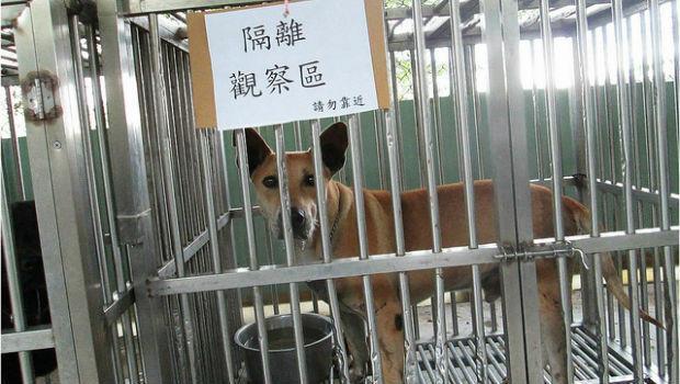 狂犬病驚魂!劉興欽目睹:鄰居染病 柱上綁到死
