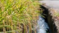 14萬噸「進口米」包裝後變「台灣米」,到底發生什麼事?