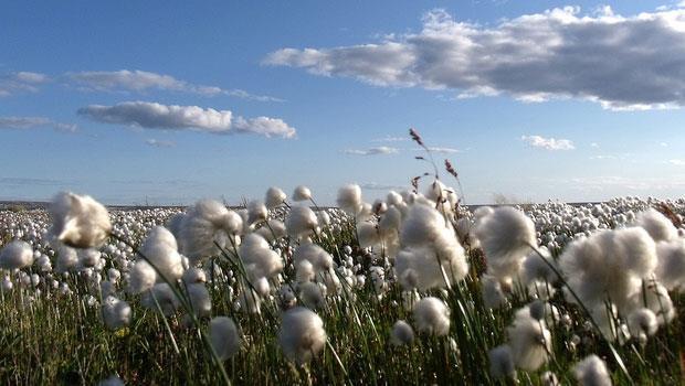棉花是世上最「毒」的作物?三撇步教你挑選有機棉