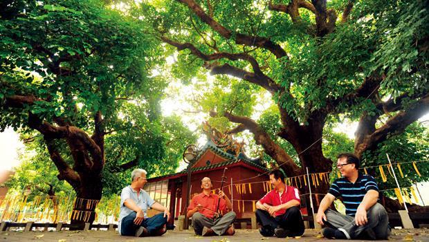 在後龍里里長郭耀泉(右2)、文史工作者黃慶聲(右3) 等護樹聯盟成員商議下,決定採祈福遶境、音樂會等柔性公民運動,守護千歲茄苳老樹。