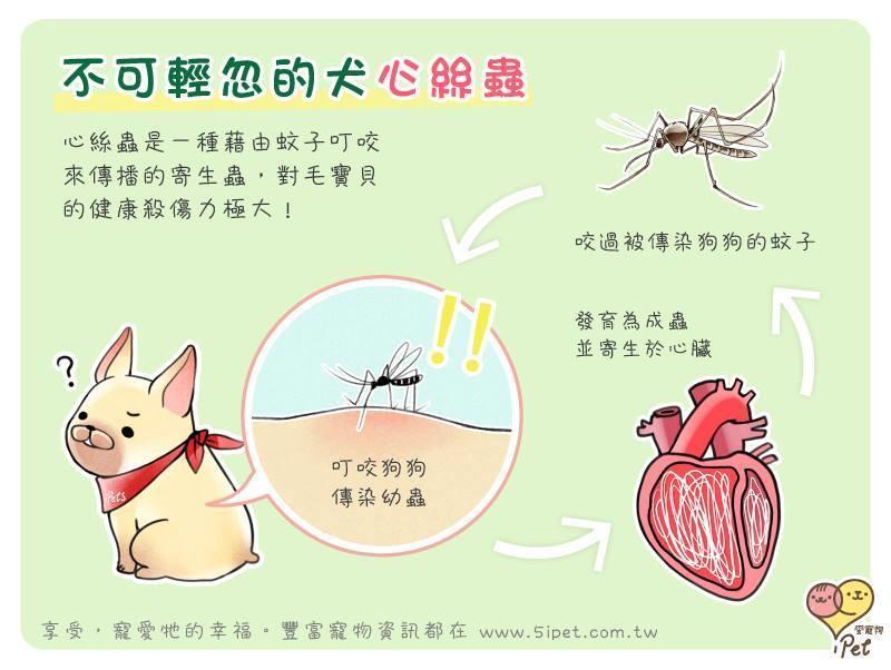當心!一隻蚊子就能殺了你的毛寶貝 - 商業周刊