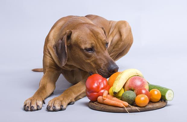 不要再給狗狗吃罐頭了,鮮食才健康! - 商業周刊