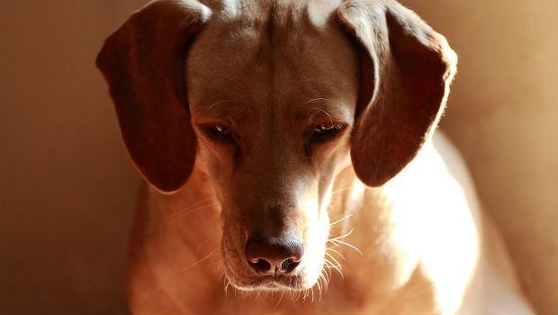 飼主睜大眼睛!被你棄養的狗是這樣死的 - 商業周刊