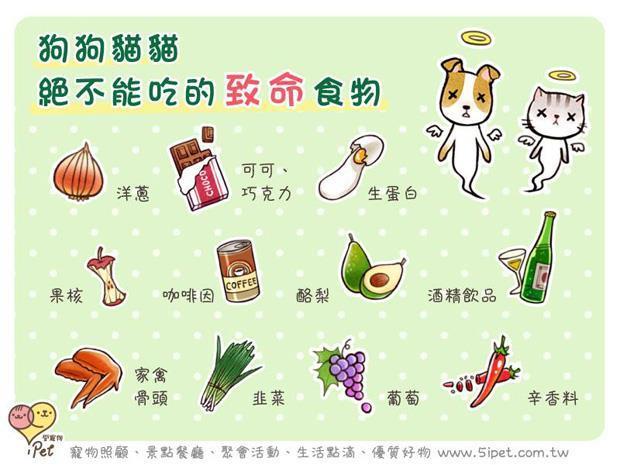注意!狗貓絕不能吃的11種致命食物 - 商業周刊