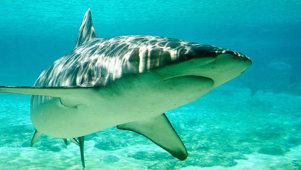 鯊魚會打卡?澳洲鯊魚只要游近海岸就會發推特