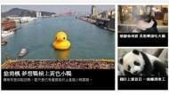 台灣黃色小鴨,木柵圓仔他家,巴西憶樺嗯嘛。夕陽西下,媒體人在幹嘛。