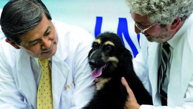 愛犬走了...你願意複製寵物,再養牠一次嗎?