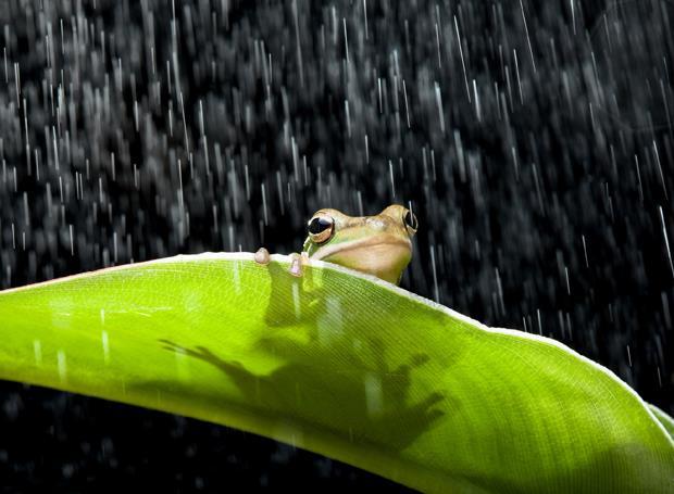 梅雨到!除濕盒哪種最好?