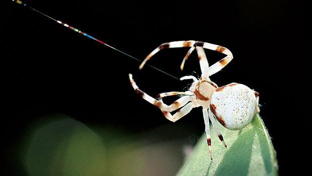 蜘蛛生態影像展