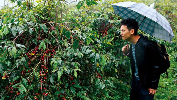 為了尋找心中夢幻咖啡豆,伊藤篤臣風塵僕僕來到阿里山。