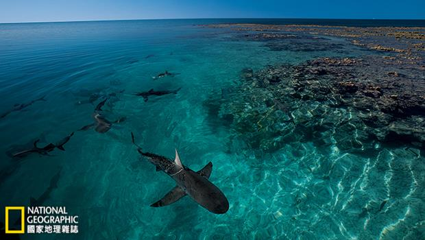 莫三比克絕代雙「礁」