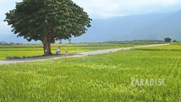 「金城武樹」倒了!學會這3句英文,向老外介紹全台灣最紅的樹
