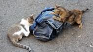 這隻貓咪跳到冰箱上睡覺,結果隔天發生了一件慘事......