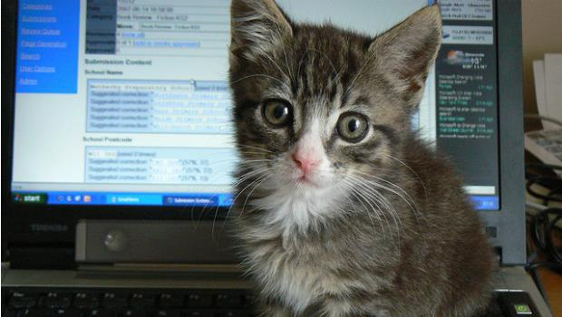 一隻貓咪證明:你家無線網路有多容易被「偷用」!