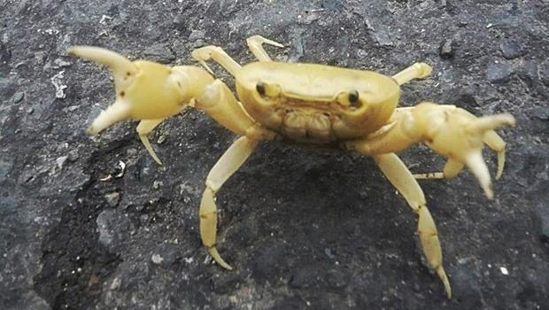 煮熟的螃蟹在走路?隱藏在屏東小村落中的奇景