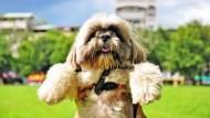 對狗狗還是不了解?7個問題教你一眼看懂狗狗喜怒哀樂