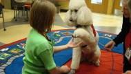沒養寵物也想讓狗狗和你握手?四步驟輕鬆學會!