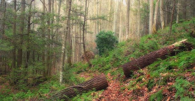 你家的紅木家具 可能背負著900多條無辜生命