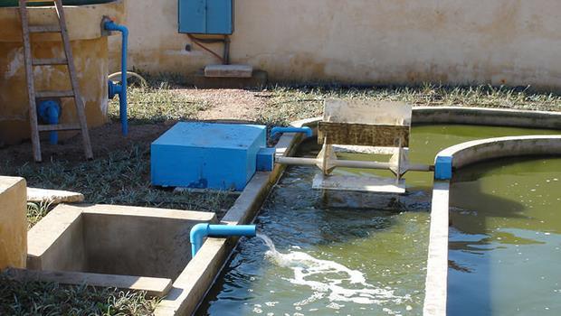 全球首次》豬糞尿廢水可以發電,還能回收磷