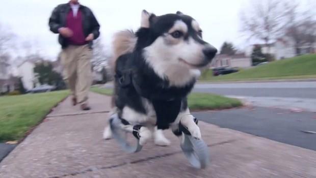 人類也將受惠!3D列印義肢,讓差點被安樂死的狗狗開心奔跑
