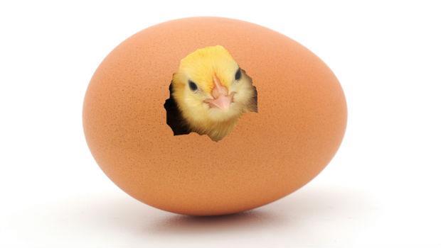 醫師告訴你:禽流感來襲,雞鴨鵝肉到底能不能吃?