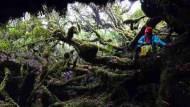 台灣也有魔幻森林!《孤獨星球》推薦:5個你不可不知的「中級山」秘境
